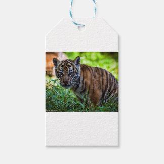 Hi-Res Sumatran Tiger Cub Pack Of Gift Tags