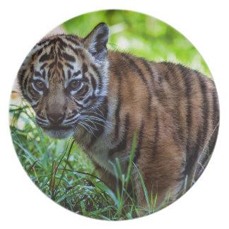 Hi-Res Sumatran Tiger Cub Party Plates