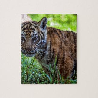 Hi-Res Sumatran Tiger Cub Puzzles