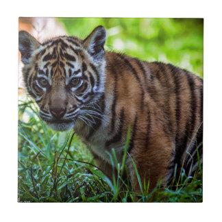Hi-Res Sumatran Tiger Cub Tile