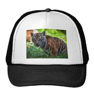 Hi-Res Sumatran Tiger Cub Trucker Hat