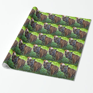 Hi-Res Sumatran Tiger Cub Wrapping Paper
