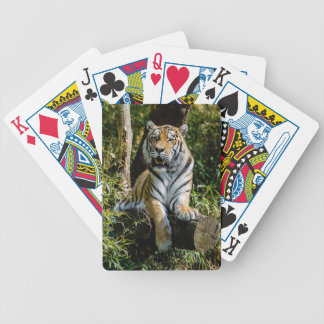 Hi-Res Tiger in Muenster Bicycle Playing Cards
