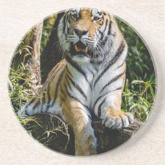 Hi-Res Tiger in Muenster Coaster