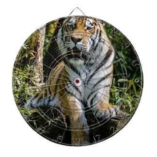 Hi-Res Tiger in Muenster Dartboard