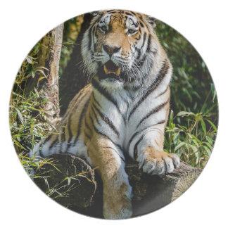 Hi-Res Tiger in Muenster Dinner Plates