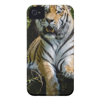 Hi-Res Tiger in Muenster iPhone 4 Covers