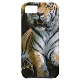 Hi-Res Tiger in Muenster iPhone 5 Cover