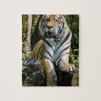 Hi-Res Tiger in Muenster Jigsaw Puzzle