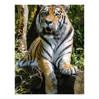 Hi-Res Tiger in Muenster Letterhead