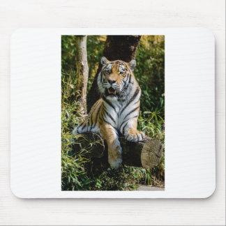 Hi-Res Tiger in Muenster Mouse Pad