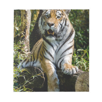 Hi-Res Tiger in Muenster Notepad