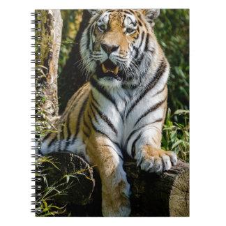 Hi-Res Tiger in Muenster Spiral Notebook