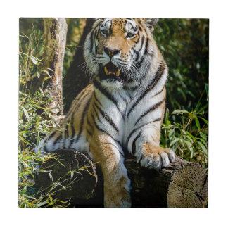 Hi-Res Tiger in Muenster Tile