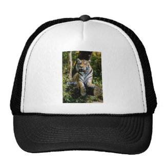 Hi-Res Tiger in Muenster Trucker Hat