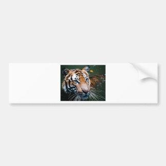 Hi-Res Tiger in Water Bumper Sticker