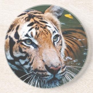 Hi-Res Tiger in Water Coaster