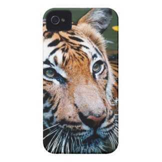 Hi-Res Tiger in Water iPhone 4 Cases