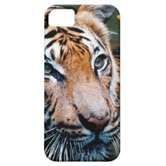 Hi-Res Tiger in Water iPhone 5 Cover