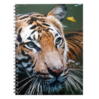 Hi-Res Tiger in Water Notebooks