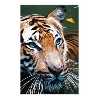 Hi-Res Tiger in Water Stationery