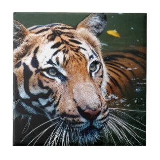 Hi-Res Tiger in Water Tile
