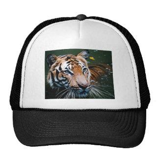 Hi-Res Tiger in Water Trucker Hat