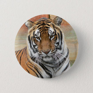 Hi-Res Tigres in Contemplation 2 Inch Round Button