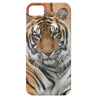Hi-Res Tigres in Contemplation Case For The iPhone 5