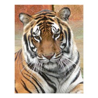 Hi-Res Tigres in Contemplation Letterhead