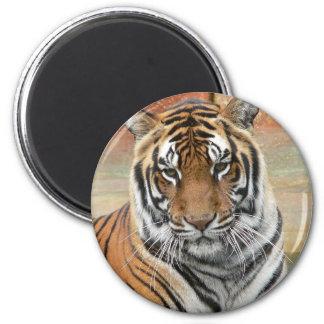 Hi-Res Tigres in Contemplation Magnet