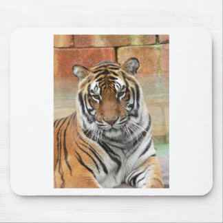 Hi-Res Tigres in Contemplation Mouse Pad