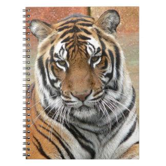 Hi-Res Tigres in Contemplation Notebooks