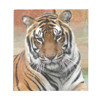 Hi-Res Tigres in Contemplation Notepads