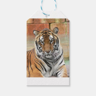 Hi-Res Tigres in Contemplation Pack Of Gift Tags
