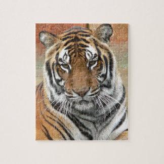 Hi-Res Tigres in Contemplation Puzzles