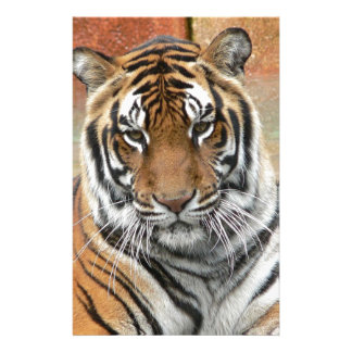 Hi-Res Tigres in Contemplation Stationery