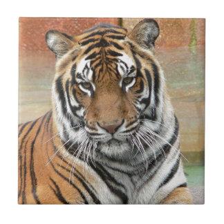 Hi-Res Tigres in Contemplation Tile