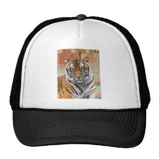Hi-Res Tigres in Contemplation Trucker Hat