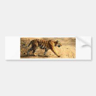Hi-Res Tigres Stalking Bumper Sticker