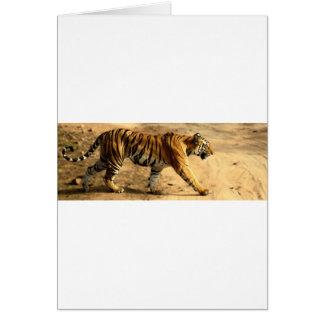 Hi-Res Tigres Stalking Card