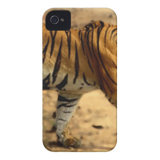 Hi-Res Tigres Stalking iPhone 4 Cases