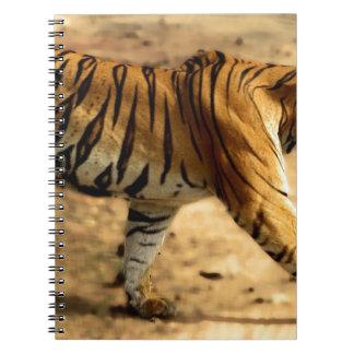 Hi-Res Tigres Stalking Notebooks