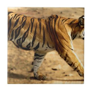 Hi-Res Tigres Stalking Tile