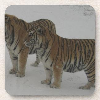 Hi-Res Two Siberian Tigers Coaster