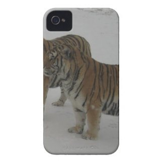 Hi-Res Two Siberian Tigers iPhone 4 Case-Mate Case