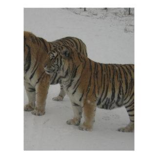 Hi-Res Two Siberian Tigers Letterhead