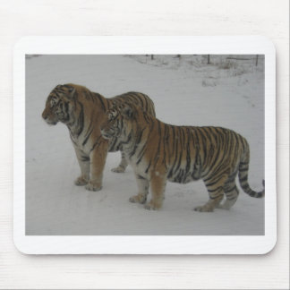 Hi-Res Two Siberian Tigers Mouse Pad