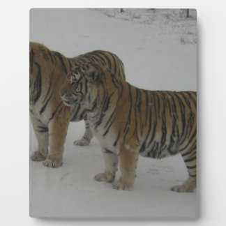 Hi-Res Two Siberian Tigers Plaque