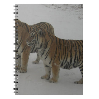 Hi-Res Two Siberian Tigers Spiral Note Book
